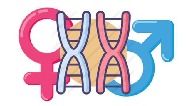 La teoría cromosómica de la herencia. José Alsina Calvés